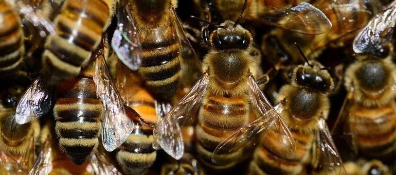 Des abeilles agglutinées entre elles. Illustration.