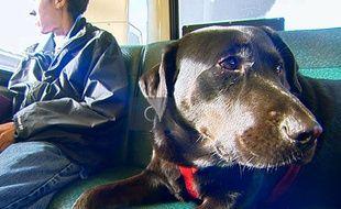 Le chien Eclipse, qui prend le bus tout seul, à Seattle.