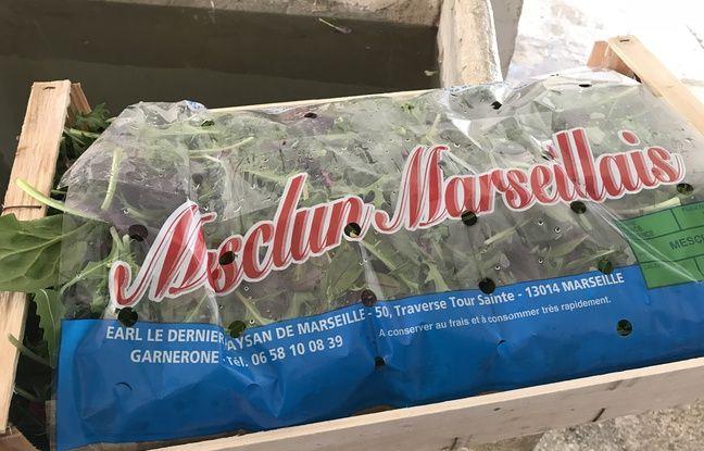 Le mesclun Marseillais, pur produit de l'exploitation agricole.
