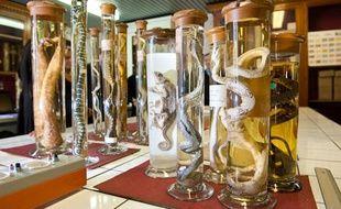 Quelque 400 bocaux et flûtes contenant des reptiles et des amphibiens ont été confiés au muséum