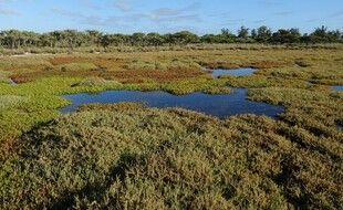 Une mangrove sur l'île Europa, territoire français dans l'Océan indien.