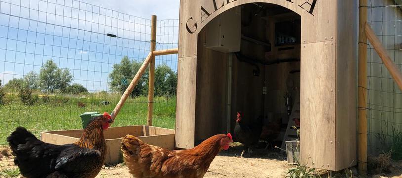 A côté des bâtiments du Sicoval, le poulailler connecté et autonome Galinetta est expérimenté depuis un mois.