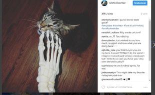 Capture d'écran du compte Instagram lancé par Kristi Loyall en novembre 2016.