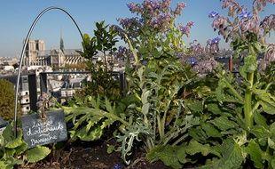 Comment Transformer Votre Balcon En Paradis Vegetal