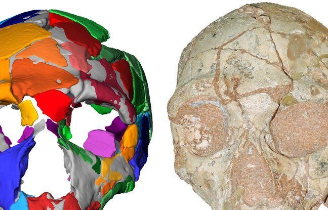 Le plus vieil Homo sapiens non africain serait grec et vieux de 210.000 ans