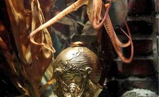 Le céphalopode avait été la star du Mondial.