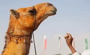 Illustration d'un chameau