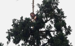 Man in Tree a tenu en haleine de nombreux internautes, au sommet de son séquoia.