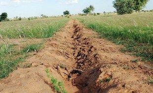 Le projet de Grande Muraille verte pour le Sahel, initié en 2007, vise à créer un rideau de verdure destiné sur près de 8000kilomètres de long et 15 km de large, du Sénégal à Djibouti.