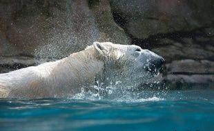 L'ours Olaf est décédé au zoo d'Amnéville à l'âge de 31 ans.