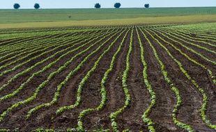 Un champ de soja dans les plaines du Cerrado, près de Campo Verde.