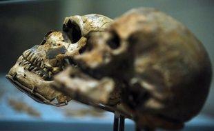 L'Homo sapiens devient adulte plus lentement que son ancêtre l'homme de Neandertal, selon une recherche euro-américaine publiée lundi aux Etats-Unis et qui s'appuie sur une nouvelle analyse de dents des deux espèces à l'aide de rayons X très puissants.