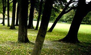 Des arbres dans le parc de la tête d'or, à Lyon.