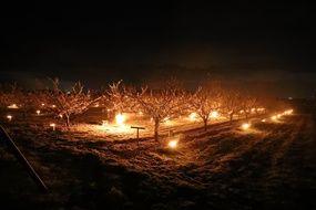 Depuis e 5 Avril , les agriculteurs de la Cueillette de Ferin allument des bougies pour protéger les vergers du gel.