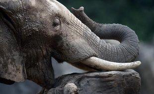 Des défenseurs des animaux sont montés au créneau mardi après la mort d'un octogénaire tué en Seine-et-Marne par un éléphant de cirque, tandis qu'une enquête qui pourrait être longue et technique sur ces faits rarissimes a été ouverte.