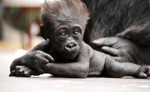 La petite Xia était née en janvier 2019 au parc zoologique de Saint Martin-la-Plaine