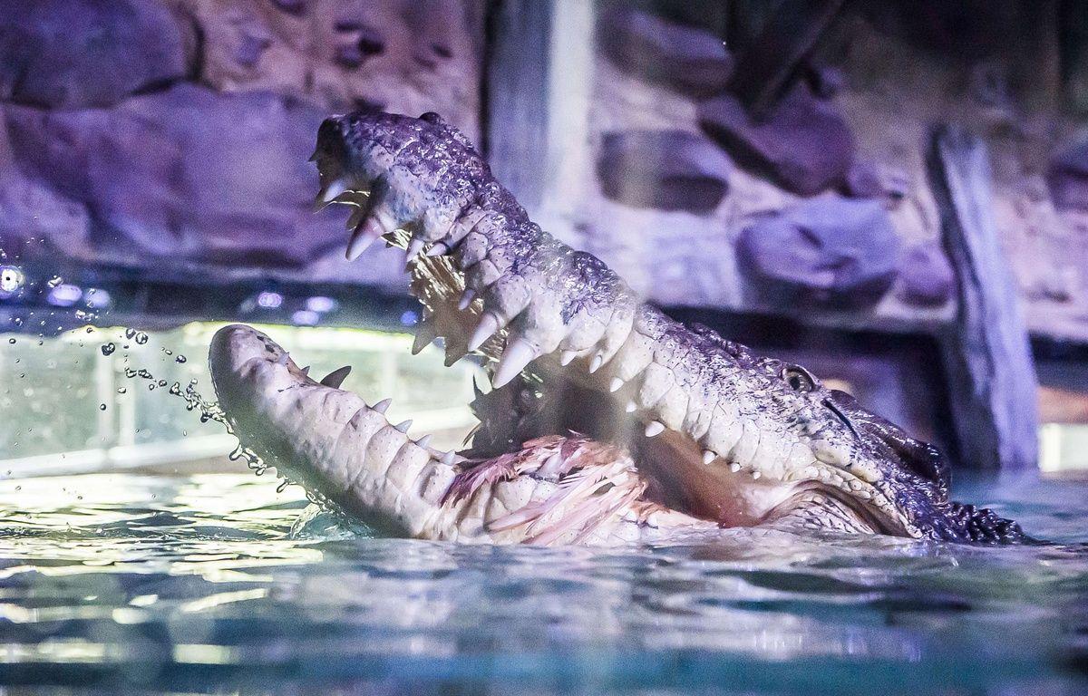 Cette prison gardée par des crocodiles n'est encore qu'un projet (photo d'illustration). – Newspix/REX Shutterstoc/SIPA