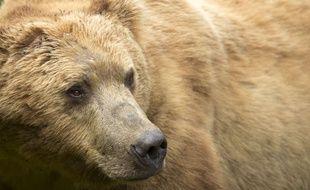 Le texte va autoriser les chasseurs à renouer avec certaines pratiques dénoncées par les associations d'animaux (illustration).