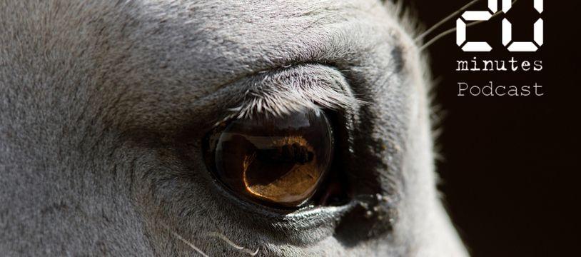 Illustration d'un cheval.