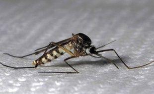 Le moustique tigre, vecteur de la dengue et du chikungunya, est arrivé chez nous en 2004.
