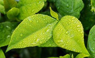 Une plante verte (illustration).