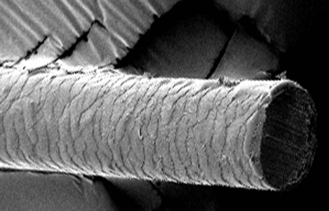 La science a enfin démêlé le mystère des cheveux incoiffables