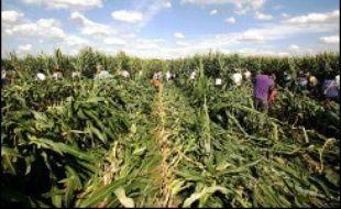 Des peines de quatre mois de prison avec sursis à trois mois ferme ont été requises mardi devant le tribunal correctionnel d'Orléans à l'encontre de 32 militants anti-OGM, jugés pour avoir participé en août 2006 au fauchage de parcelles de maïs transgénique dans le Loiret.