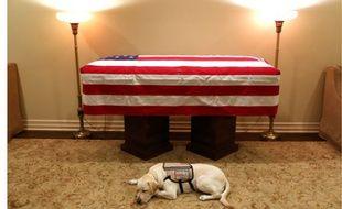Le labrador Sully a assisté George H. W. Bush alors qu'il avait du mal à se déplacer en raison de la maladie du Parkinson.