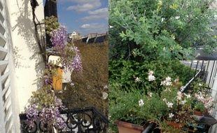 Chaque printemps, Sylvette fait passer son balcon parisien pour les Jardins suspendus de Babylone.