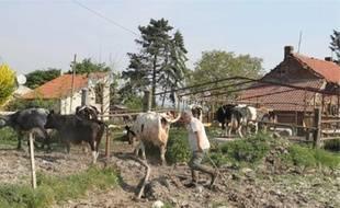 Le fourrage destiné aux bovins est 50% plus cher que l'an dernier.