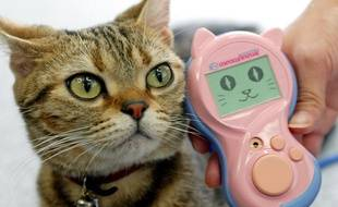 Les Japonais ont inventé le Meowlingual, le premier traducteur de langue des chats.