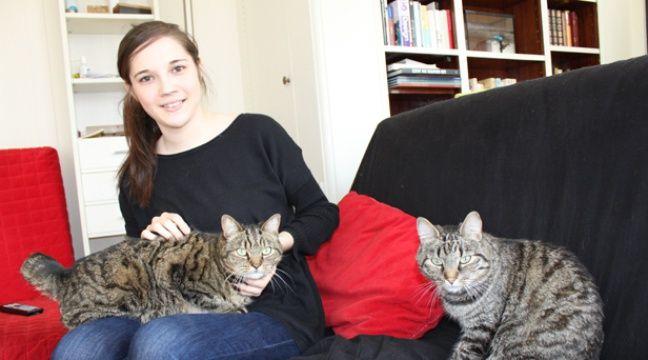 garde d 39 animaux et si vous pr tiez votre chat. Black Bedroom Furniture Sets. Home Design Ideas