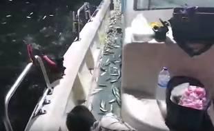 Selon un pêcheur, les milliers de sardines étaient effrayées par des prédateurs.