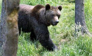 Le gouvernement a décidé de ne pas lâcher d'ours supplémentaires dans les Pyrénées dans l'immédiat en objectant aux défenseurs du plantigrade que l'actuelle population grandit à un rythme satisfaisant.
