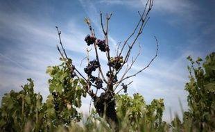 """Le parquet de Villefranche-sur-Saône (Rhône) a réclamé de 700 à 5.000 euros d'amende contre des viticulteurs jugés pour un trafic de sucre destiné à surchaptaliser des vins du Beaujolais, des réquisitions qualifiées de """"modérées"""" par l'un de leurs avocats."""