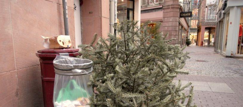 Strasbourg: Attendez les jours de collecte pour vous débarrasser de votre sapin (et éviter les amendes) (Archives)