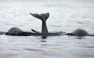 Trafic maritime, prospection pétrolière, traque de sous-marins, parcs éoliens offshore... N'en déplaise au commandant Cousteau et aux espèces qui y vivent, l'océan n'est pas le monde du silence.