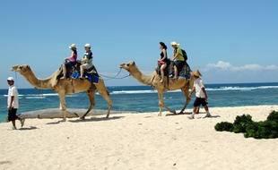 Des touristes faisant une balade à dos de chameaux à Bali (Indonésie)