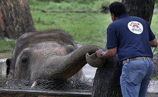 Kaavan, un éléphant obèse et maltraité depuis des années dans un zoo pakistanais, sera bientôt transféré dans une réserve au Cambodge.