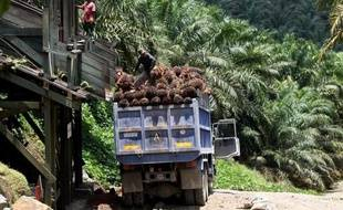 """L'association des petits producteurs d'huile de palme de Malaisie (NASH) a écrit à la ministre française du Commerce extérieur Nicole Bricq en visite à Kuala Lumpur pour se plaindre de ce qu'elle estime être une campagne de """"dénigrement"""" de l'huile de palme en France."""
