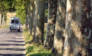 Un véhicule roule le 5 septembre 2001 près de Villasavary, dans l'Aude, sur une départementale bordée de platanes