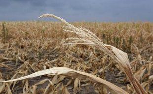 L'agriculture a de tous temps été soumise aux caprices de la météo. Mais le réchauffement climatique et sa cohorte d'incidents extrêmes contribue à transformer le marché des céréales, désormais largement globalisé, en un investissement très spéculatif.
