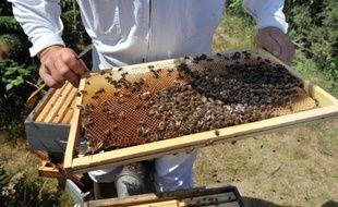 """Un virus très contagieux transmis par l'acarien parasite """"Varroa"""" contribuerait à la propagation et probablement à la mort de millions d'abeilles dans le monde, selon des chercheurs américains et britanniques dont les travaux ont été publiés jeudi aux Etats-Unis."""