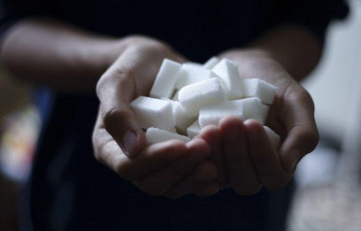 Illustration de morceaux de sucre  – LODI FRANCK/SIPA