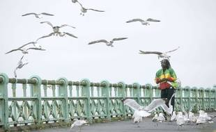 Les experts se sont accordés à dire qu'il y a actuellement plus de mouettes que jamais dans le sud de l'Angleterre. Ici, à Brighton.