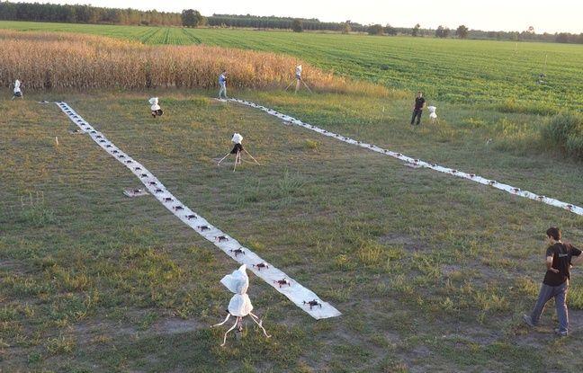 Des répétitions du spectacle de drones ont été organisées dans un champ de Cestas.
