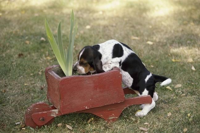 Illustration d'un chien intéressé par une plante
