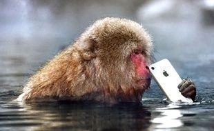 Le Défi photo Apple est ouvert à tous jusqu'au 7 février 2019.