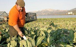 Jean-Marie Gioanni cultive plusieurs hectares dans la plaine du Var, près de Gattières.