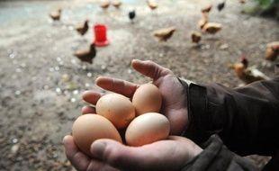 Des oeufs produits dans un élevage bio, en 2013 en France